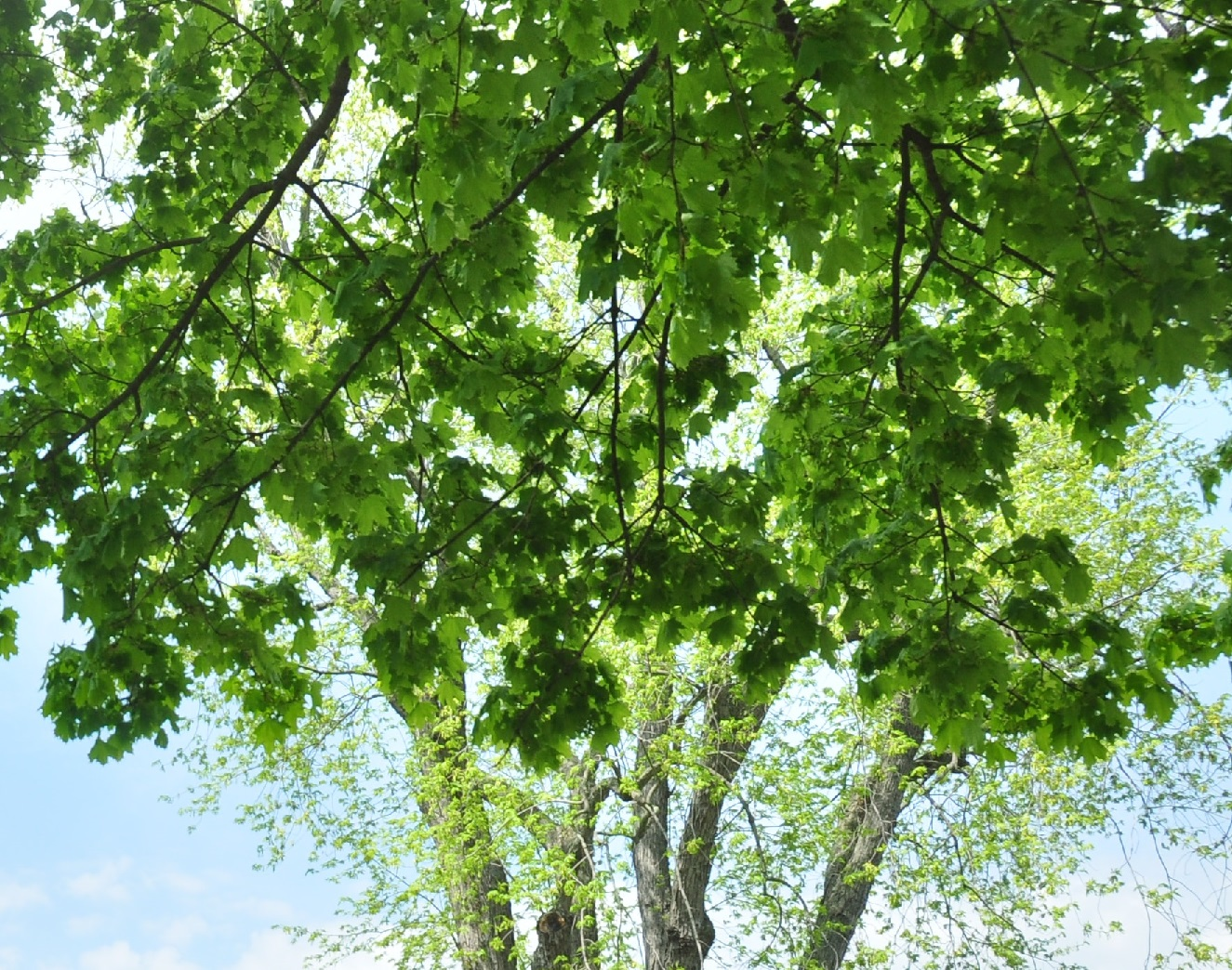 The Gypsy Moth & Emerald Ash Borer: What You Need To Know